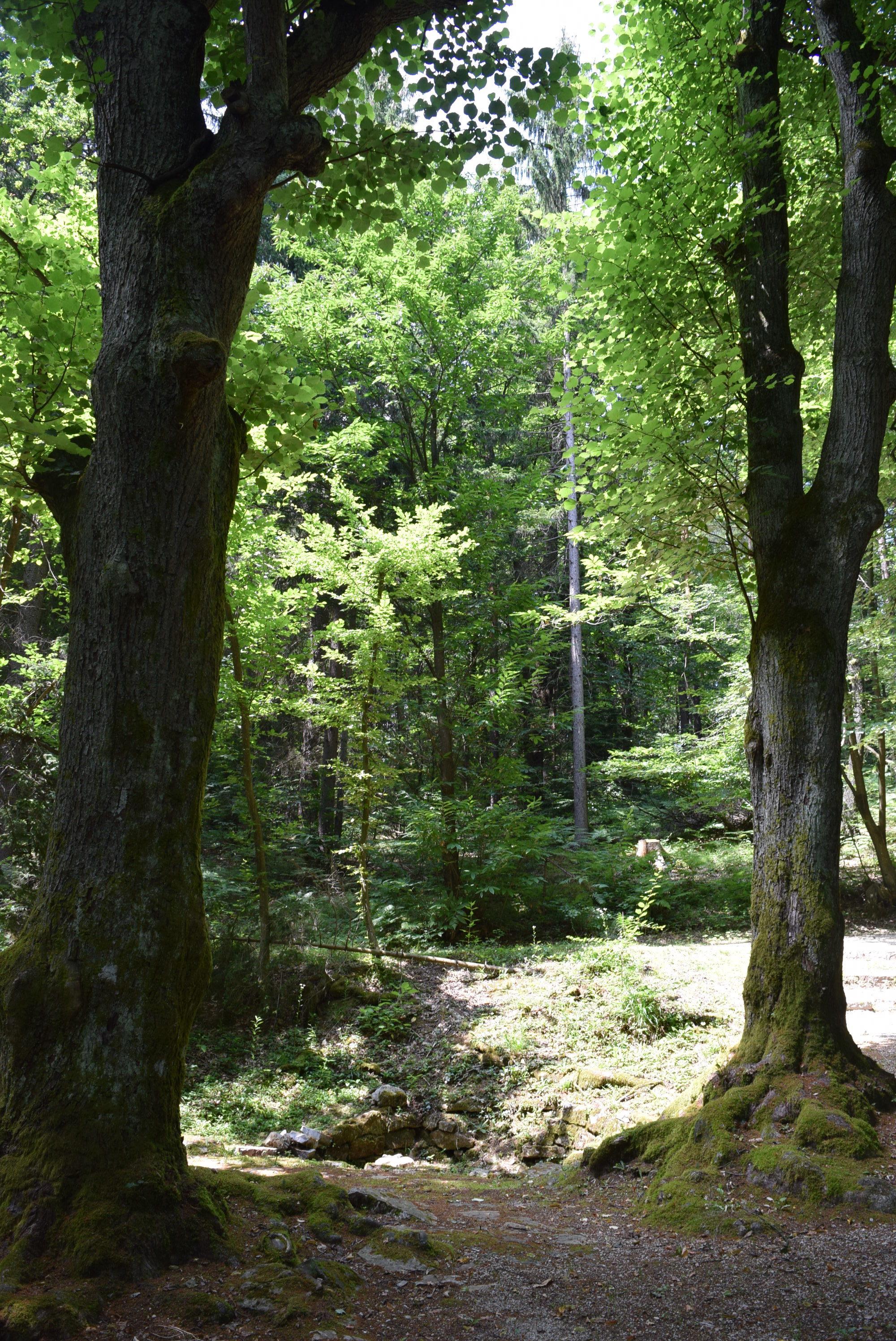 mucili-so-tudi-pri-dveh-lipah-v-gozdu